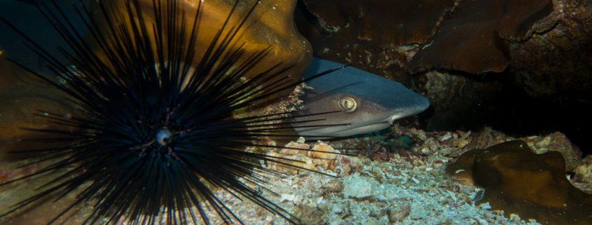 Night Time Fishing Charter | Private Florida Fishing Charter