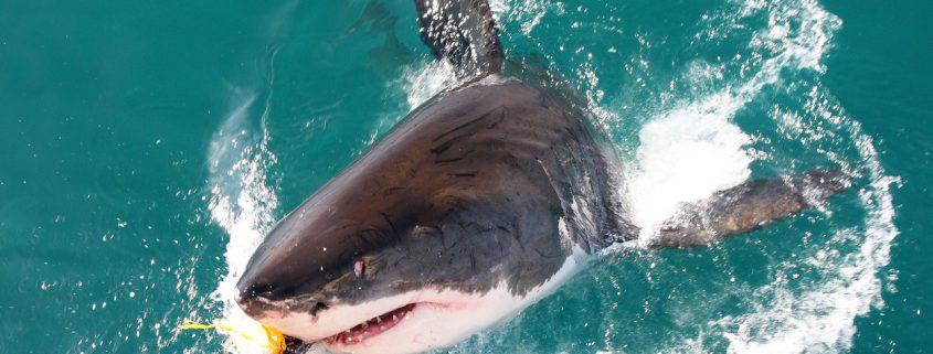 Shark Fishing in Florida | Florida Shark Fishing Charters